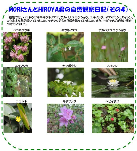 150509_nature_05.jpg