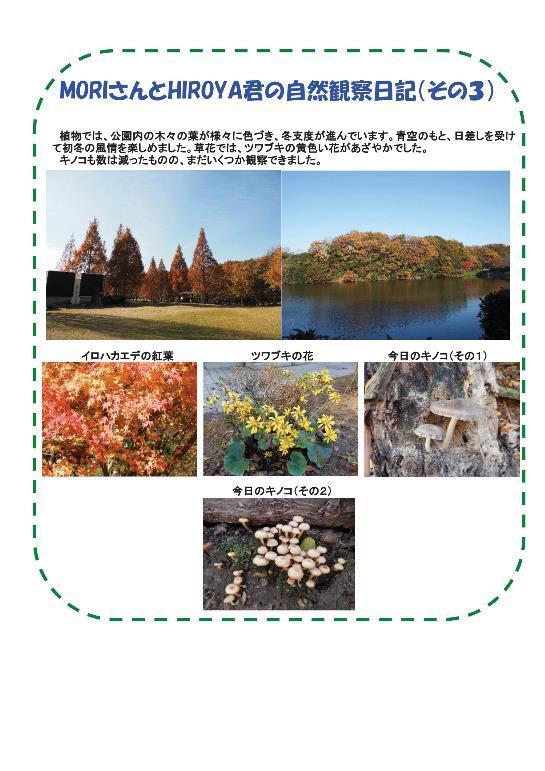 161203 里山整備活動報告-004.jpg