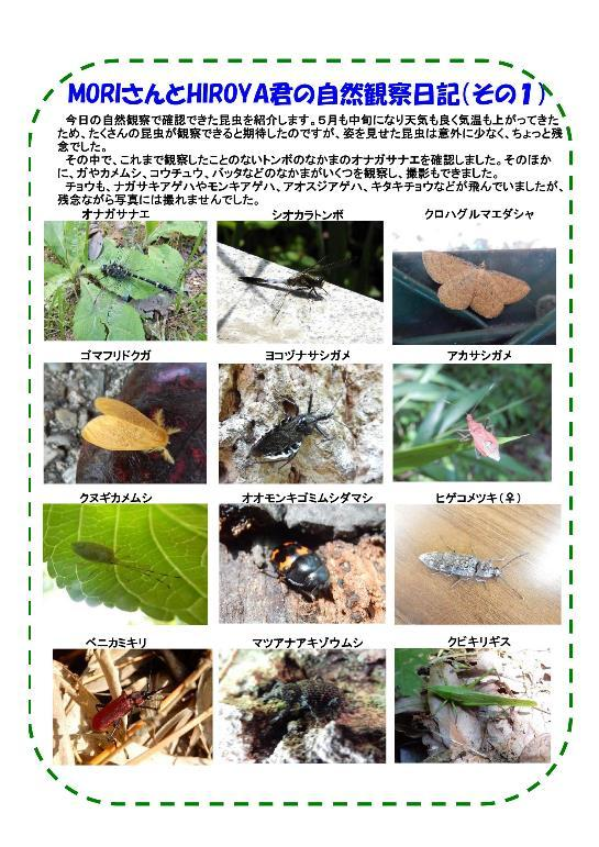 180512 里山整備活動報告(13008)-002-resize.jpg
