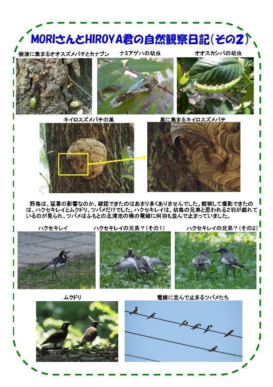 180714 里山整備活動報告-003-resize.jpg