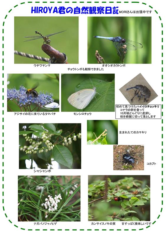 20110722_nature_img_002.jpg