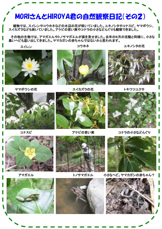 20130629_nature_img_003.jpg