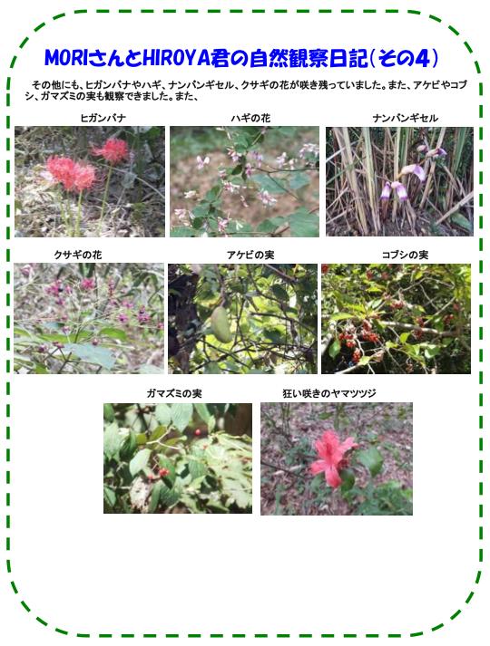 20131010_nature_03.jpg