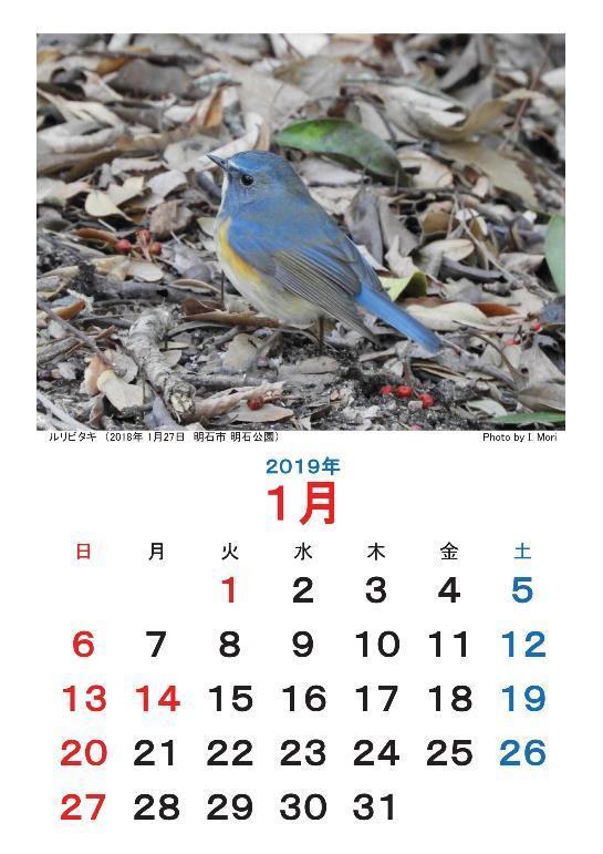 2019カレンダー野鳥-001-resize.jpg