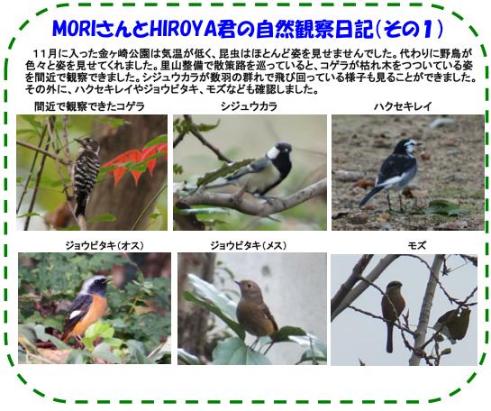 nature_141108_03.jpg