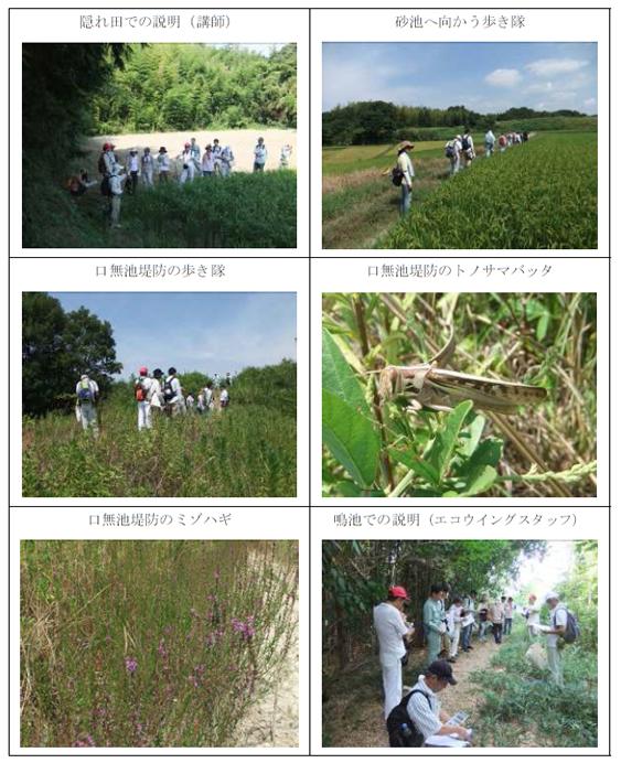 nature_20101006_img02.jpg