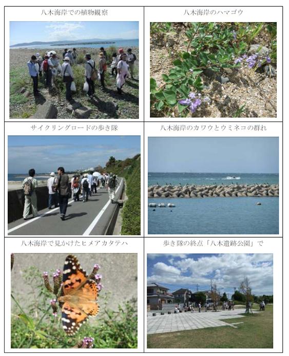 nature_20101006_img04.jpg