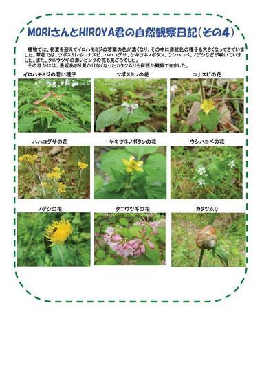 resize-自然G_160507里山整備活動報告-006.jpg